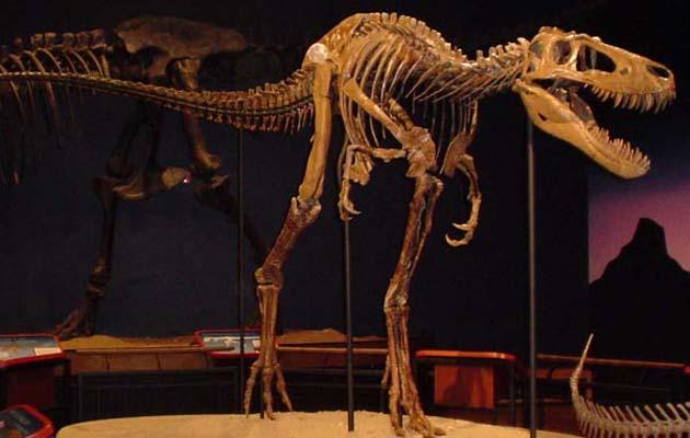 Tyrannosaurus-Rex2