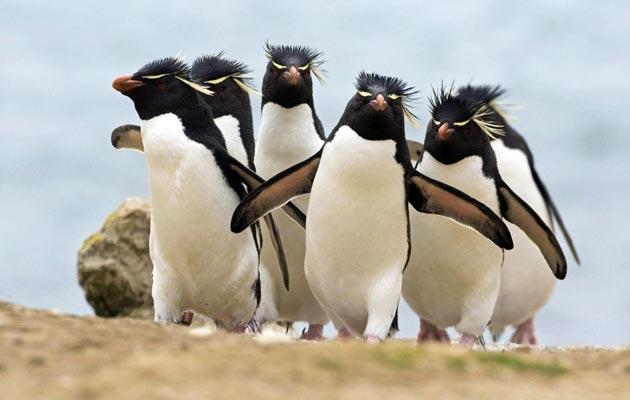 """Neki istraživači su primijetili da muški i ženski pingvini ponekad """"varaju"""" svoje partnere."""