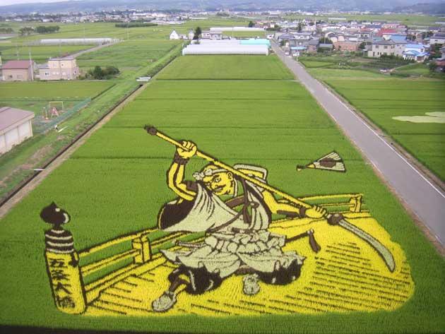 polje-rize13