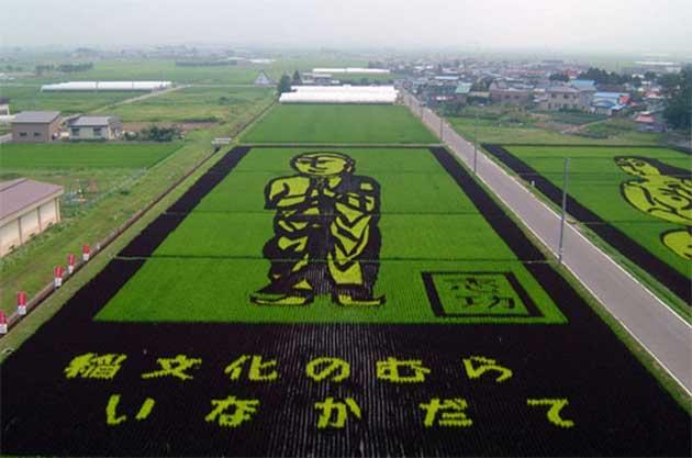 polje-rize5