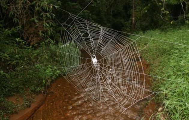 darwinov-pauk