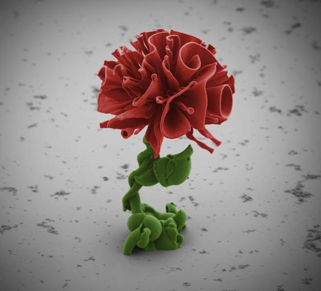 mikroskopsko-cvijece1