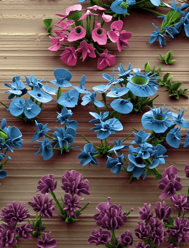 mikroskopsko-cvijece4