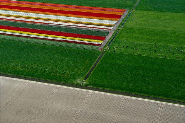 polje-tulipana14