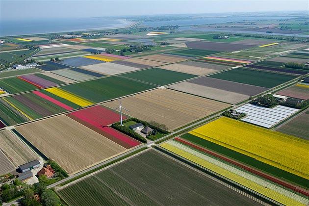 polje-tulipana9
