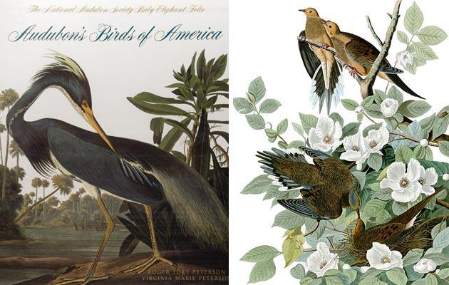 Ptice-Amerike