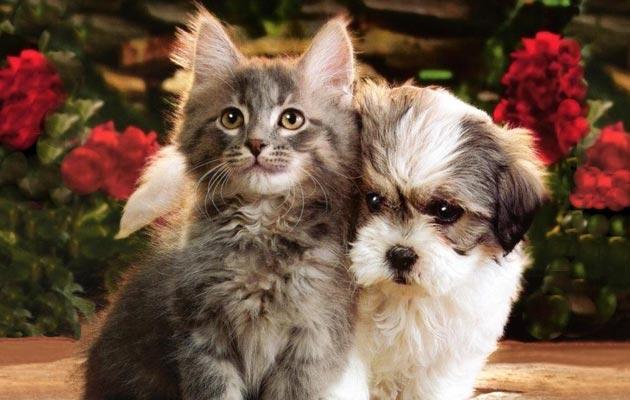 Nova studija, provedena u Sveučilištu Hirošima, utvrdila je da ljudi izvode različite zadatke brže ili tačnije nakon gledanja slika slatkih maca i cuka.