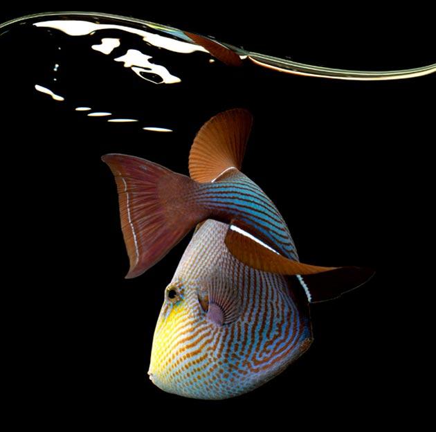 morska-bica14