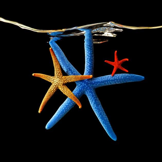 morska-bica2