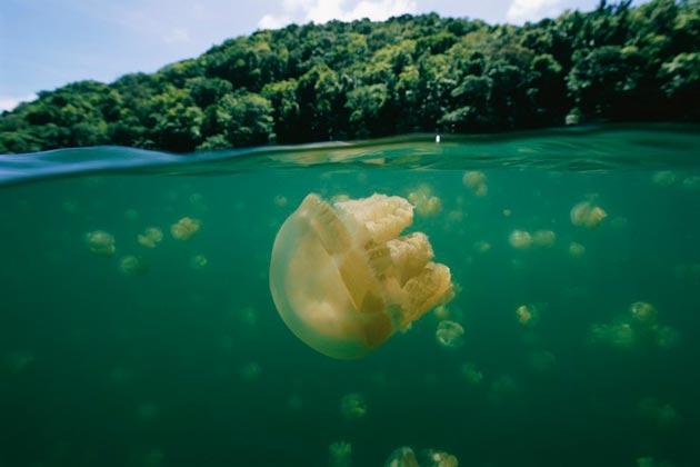 Jezero-Meduza-3