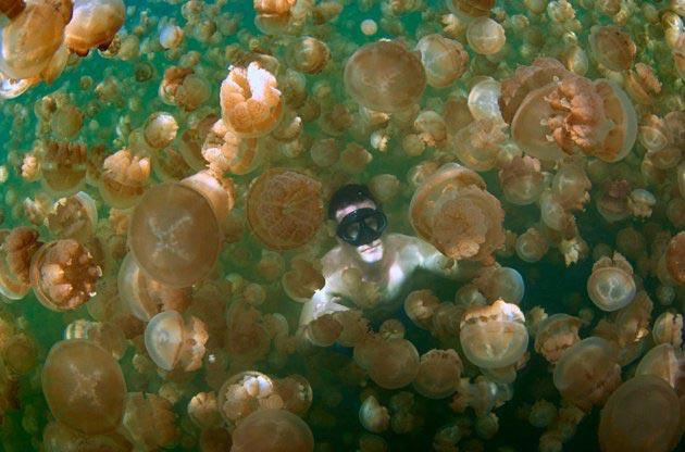 Jezero-Meduza-6