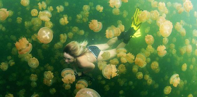 Jezero-Meduza