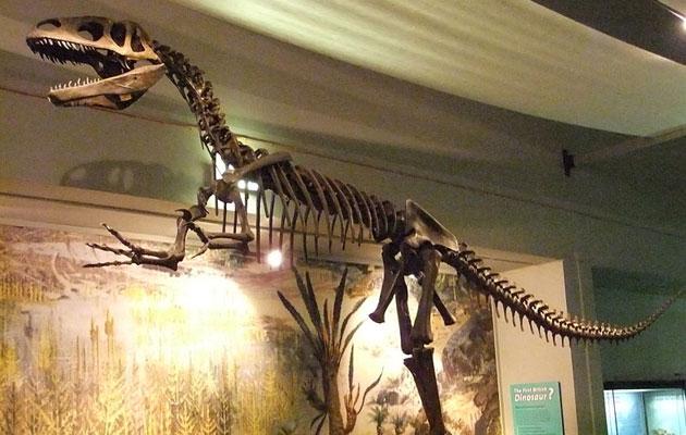 Megalosaurus je možda bio prvi i dinosaur koji je opisana u naučnoj literaturi.