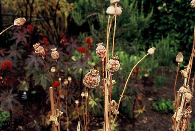 Otrovni-vrt-Alnwick-11