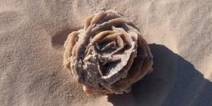 pustinjska-ruza