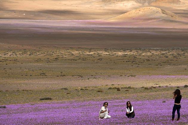 Atacama-3
