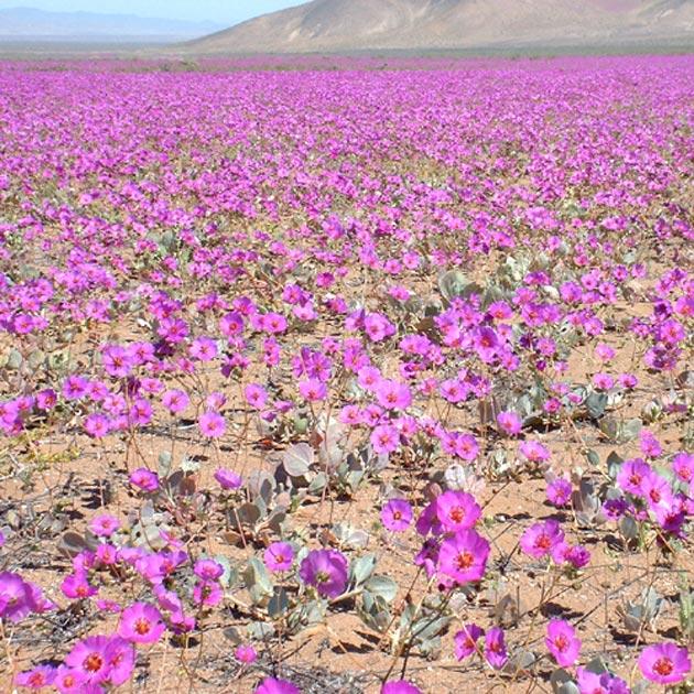 Atacama-7