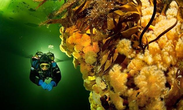 podvodne-fotografije-10