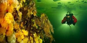 podvodne-fotografije
