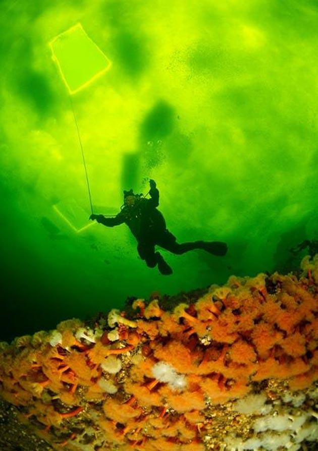 podvodne-fotografije-6