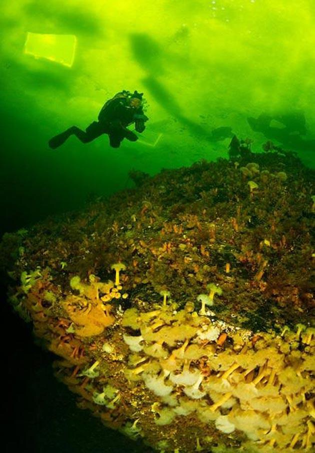 podvodne-fotografije-9