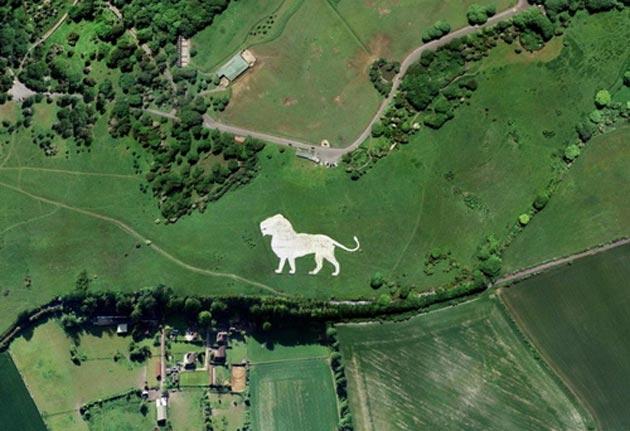 Whipsnade Bijeli lav je 147 metara dugačak lik lava koji je nastao oko 1930-te godine, a njegova svrha je označavanje položaj Whipsnade biljnog i životinjskog parka.