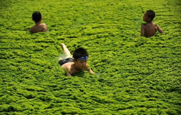 zelena-plaza-6
