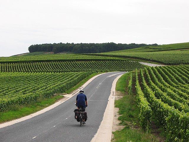 vinograd-10