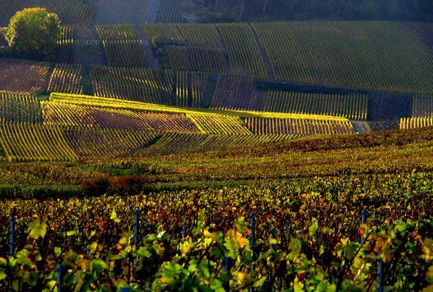 vinograd-14