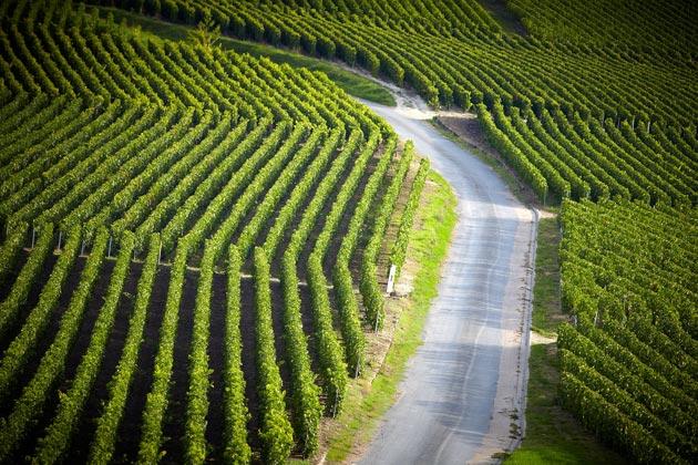 vinograd-3