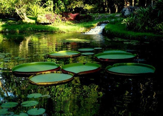 Botanicki-vrt-6