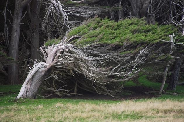 drvece-2