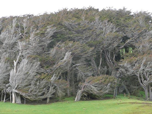 drvece-5