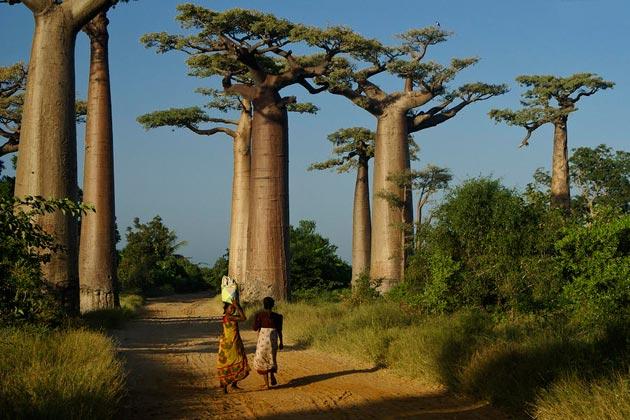 Avenija-Baobaba-1