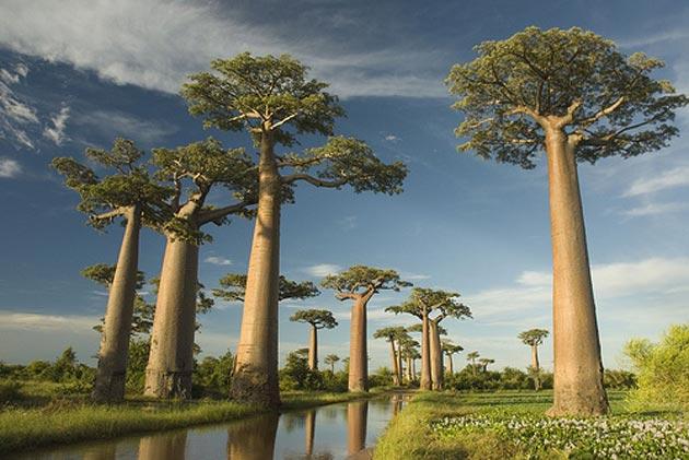 Avenija-Baobaba-3