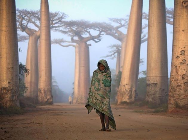 Avenija-Baobaba-4