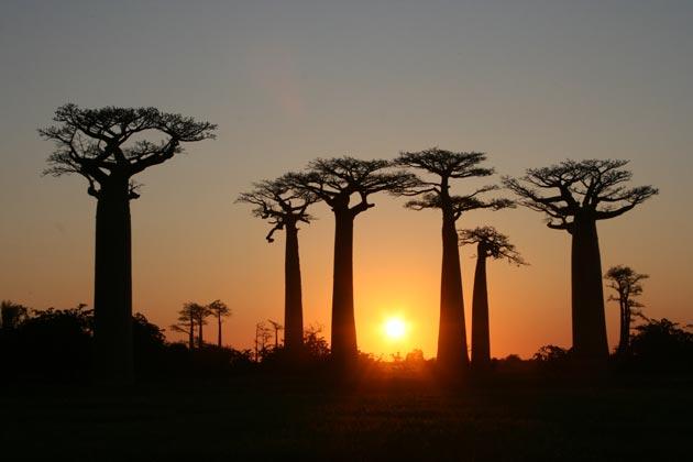 Avenija-Baobaba-5