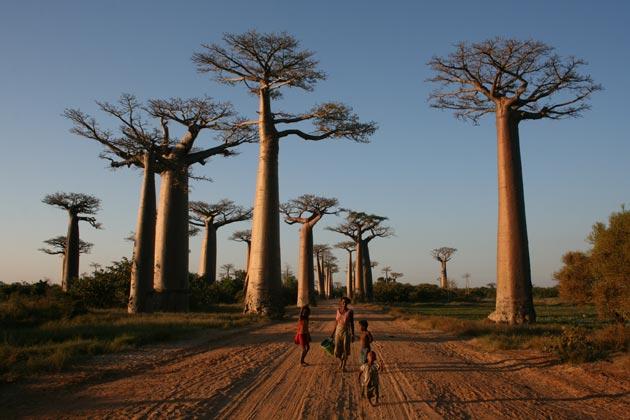 Avenija-Baobaba-6
