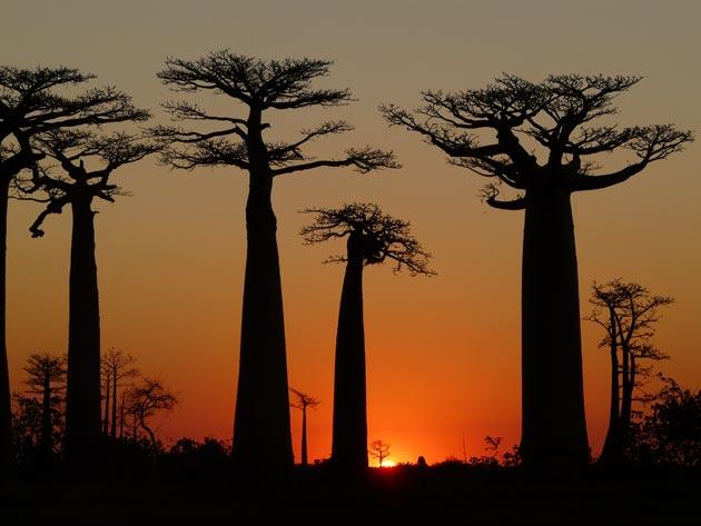 Avenija-Baobaba-8