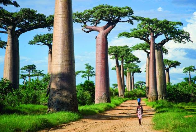 Avenija-Baobaba-9