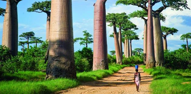 Avenija-Baobaba