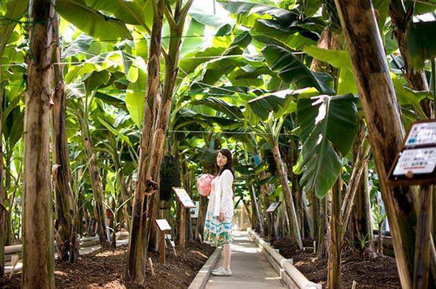 Tropski vrt Atagawa