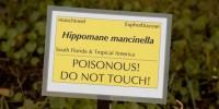 Hippomane-mancinella