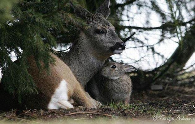 zec-i-bambi