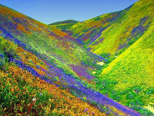Dolina-cvijeca-1