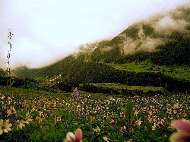 Dolina-cvijeca-10