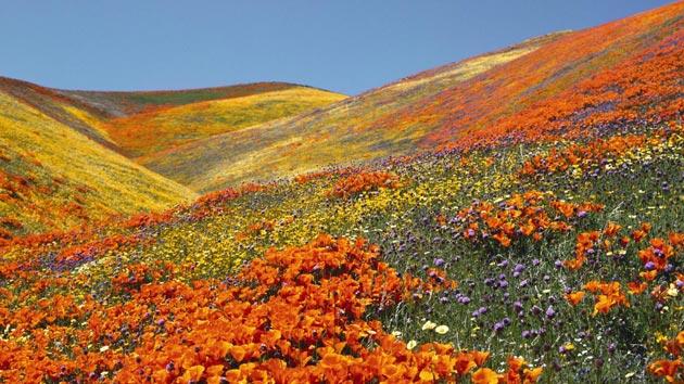 Dolina-cvijeca-2