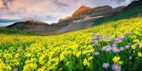 Dolina-cvijeca