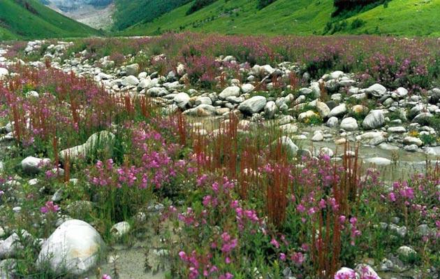 Dolina-cvijeca-3