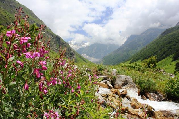 Dolina-cvijeca-6